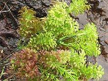 GSYLOL Kunststoff Künstliche Moos Gras Bonsai