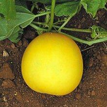 Gurke Gelb Runde - Gemüsesamen, 100 Samen/pack