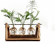 gzq Glas Vase Blumen Pflanztopf Hydrokultur