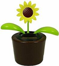 HAAC Solar Wackelblume Blume Motiv Sonnenblume im
