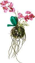 Hänge-Orchidee, rosa
