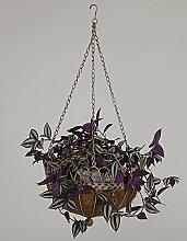 Hängende Blumentöpfe Im europäischen Stil pastorale Gartenmauer Blumentopf Regale Eisen Wand hängenden Blumenkorb ( farbe : A )