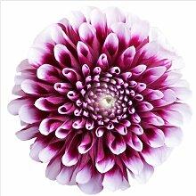 Halbglänzende Tapete Blumen Aster East Urban Home