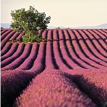 Halbglänzende Tapete Blumen Lavender East Urban