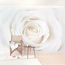 Halbglänzende Tapete Pretty White Rose Blumen