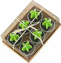 Handgefertigt Sukkulente Kaktus Teelicht Kerzen,