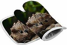 Handschuhe Hedgehog Farbe Regelmäßige
