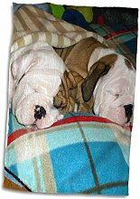 Handtuch, 3D-Rose, Englische Bulldogge, Powernap