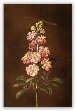 Hartschaum Bilder - Wandbild Dietzsch - Eine rosa Garten Levkkoje