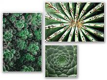 Hartschaum Bilder - Wandbild Sukkulenten-Set