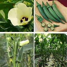Hausgarten-Anlagen 200 Samen Red Spicy Hot Lange Chili, Patio Pflanze Gemüsesamen