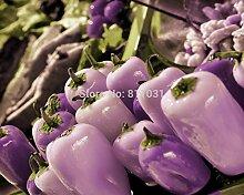 Heiße verkaufen20pcs / bag lila Kristall Pfeffer seltene Gemüsesaatgut Bonsai Pflanze Hausgarten