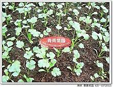 Heißer Verkauf 100pcs / bag lila Kristall Pfeffer seltene Gemüsesaatgut Bonsai Pflanze Hausgarten
