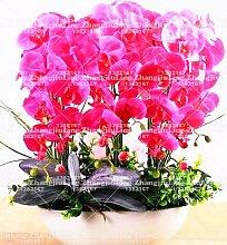 Heißer Verkauf! 9 Sorten Phalaenopsis Seeds Staude Blütenpflanzen Topf Charming Orchidee Blumen-Samen, 50 PC / bag 3