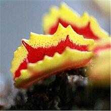 Heißer Verkaufs-100PCS / lot Topf Insectivorous Pflanzensamen muscipula Riesen Clip Venus Flytrap Samen Gartendeko