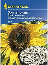 Helianthus annuus Sonnenblume Snack essbare Kerne