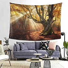 Herbst Herbst Wald Bäume Goldener Sonnenschein
