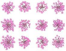 HETHYAN 12/30 stücke gepresste getrocknete blume