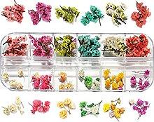 HETHYAN 1box Real Getrocknete Blumen Pflanzen für