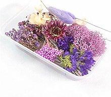 HETHYAN Getrocknete Blumen Trockene Pflanzen-1 Box