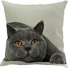 Hffan Kissen mit Katzenmotiv lustig Katze bricht