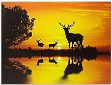 Hirsch Bild Sonnenuntergang Sonnenaufgang - LED