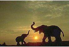 HNDXLHH Diamond Painting Set 60x80cm Elefanten