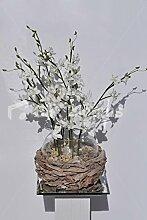 Hoch Dendrobium-Orchidee Pflanze & Wood Bark Vase Blumen-Arrangemen