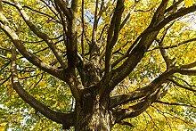 Hochwertige Fototapete - Baum in der Herbstzeit I