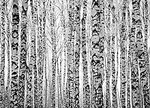 Hochwertige Fototapete - Birkenwald I