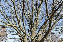 Hochwertige Fototapete - Kahler Baum I