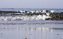 Hochwertige Fototapete - Möwen an der Nordsee