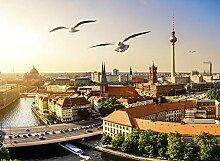 Hochwertige Fototapete - Möwen in Berlin I