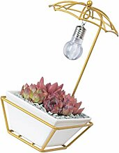 Holibanna 1 Set Regenschirm Sukkulenten Pflanzer