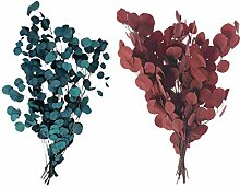 Holibanna 2Pcs Eukalyptus Getrocknete Blumen Reale