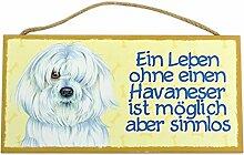 Holzschild Tierschild Hund Deko Havaneser