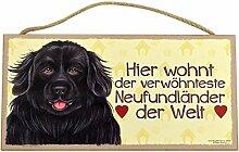 Holzschild Tierschild Hund Deko Neufundländer