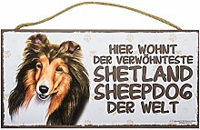 Holzschild Tierschild Hund Deko Shetland Sheepdog