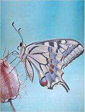 Home affaire LED-Bild Schmetterling 60x80 cm bunt