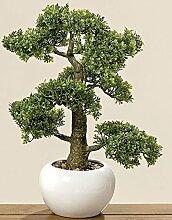 Home Collection Bonsai im Topf H48cm (Buchsbaum)
