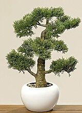 Home Collection Bonsai im Topf H48cm (Zypresse)