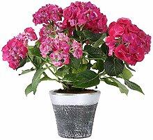 Home&Decorations 65 Blumentopf mit
