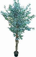 HomeAndGarden.UK Großer 1,8m Bunt Ficus Benjamini