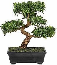 Homefinity Künstlicher Bonsai Podocarpus Baum ca.