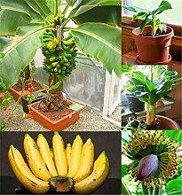 Homely 50 Stücke/Banane, Zwerg Obst Samen,