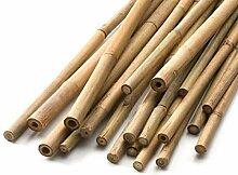 HomeZone 60cm Bambus Stangen Absolute Gärtner