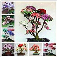 HONIC 11: 100 Stück Azalee Samen Rhododendron
