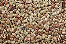 HONIC Samen-Paket: 500 Pferd Gramm Bohnen-Samen,