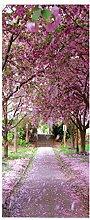 HOPAX Aprikosenblüte Türaufkleber