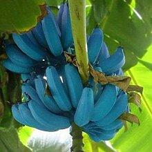 Hot 100 Stücke Samen/Beutel Banane Frucht
